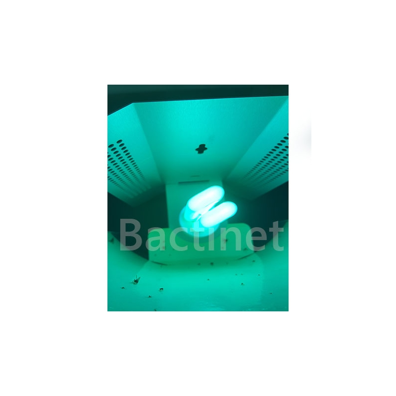 Bactinet Glue Pad Materiel Insecticide 4